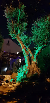 תאורה רחוב סולארית עצים