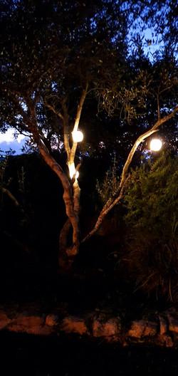תאורה סולרית לגינה
