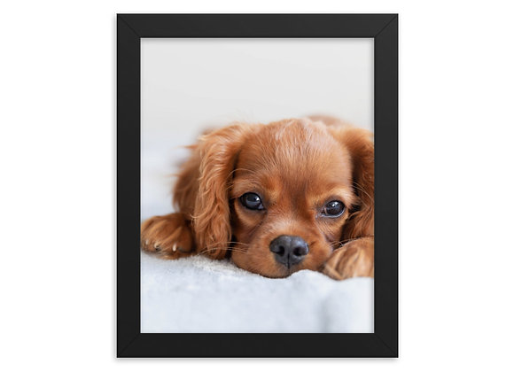 A Puppy Named Max Framed poster
