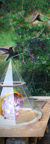 Hummingbird Redemption