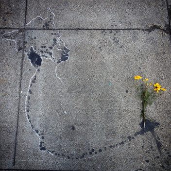 flowers(crop).JPG