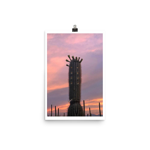 Saguaro with Cigarette at Sunset