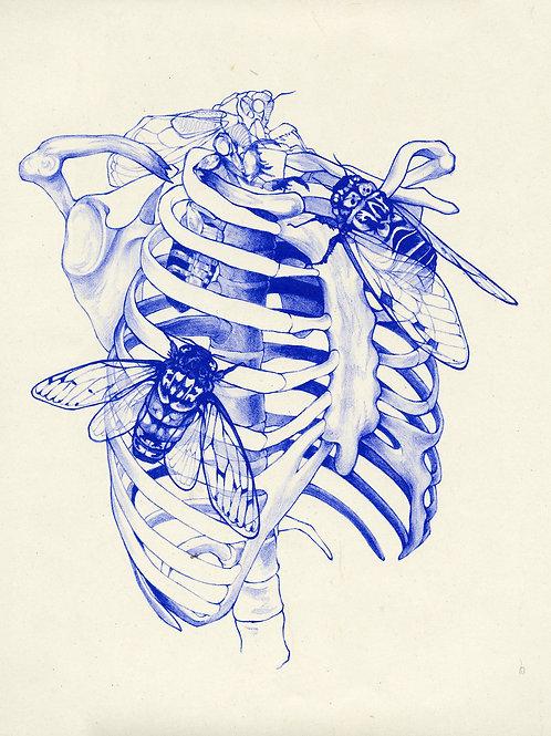 cicada cage (blue)