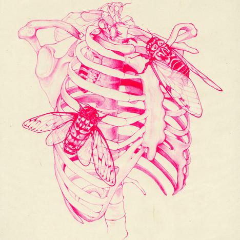 cicada cage