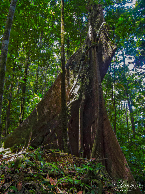 Saint Lucia Landscape Photogaphy Butress