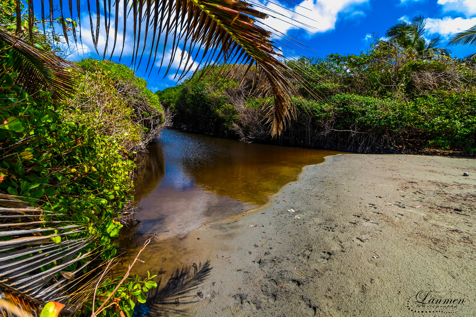 Saint Lucia Landscape Photogaphy Mangrov