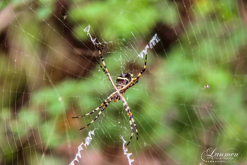 St Lucia Photography Wildlife Insect Spi
