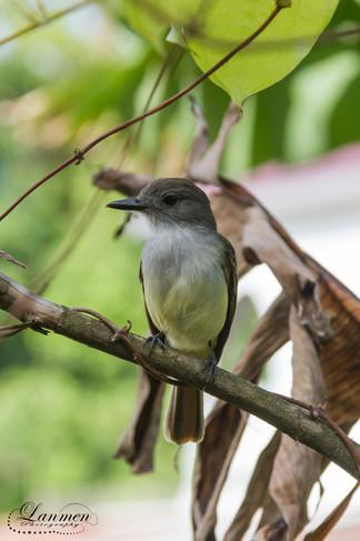 St. Lucia Wildlife Photoraphy Bird Fly C