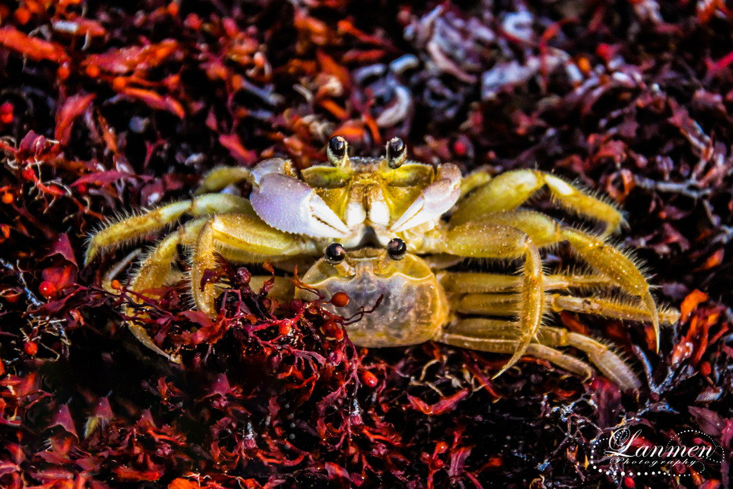 St Lucia Photography Wildlife Ghost Crab