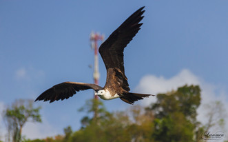 St Lucia Photography Wildlife Bird Magni