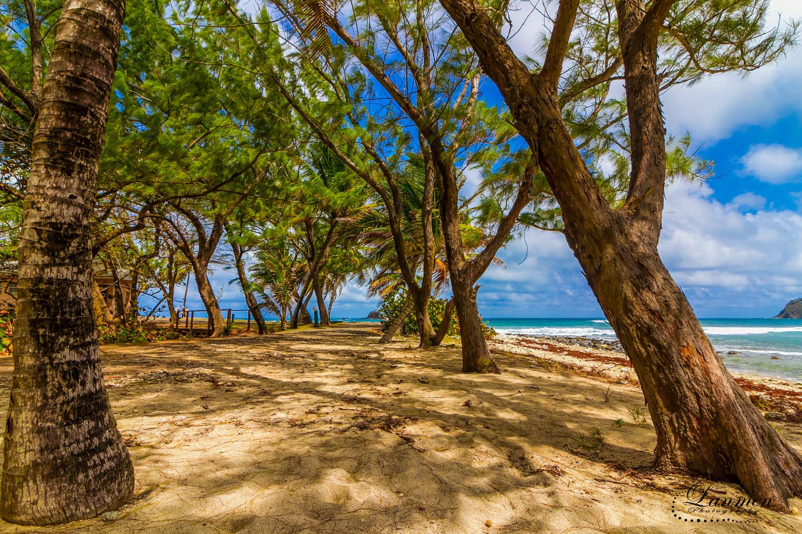 Saint Lucia Landscape Photogaphy Pigeon