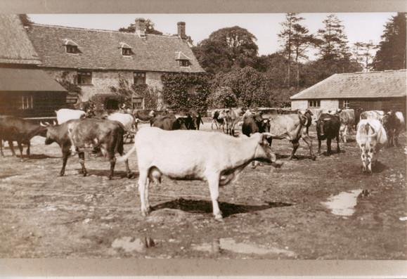 Farmyard1925.jpg