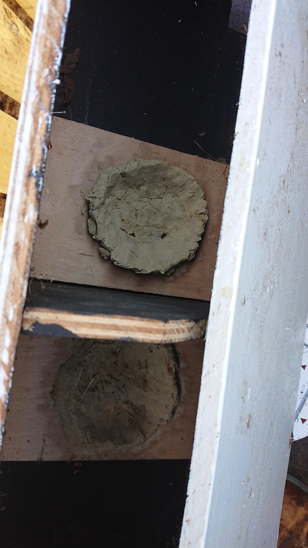 Cement next cups inside