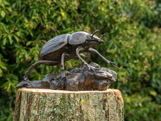 A giant dung beetle