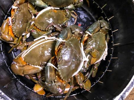 幻のどうまん蟹、食べたことありますか?