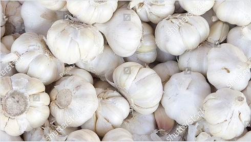 garlic pic 1.JPG