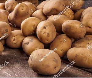 potato pic1.JPG