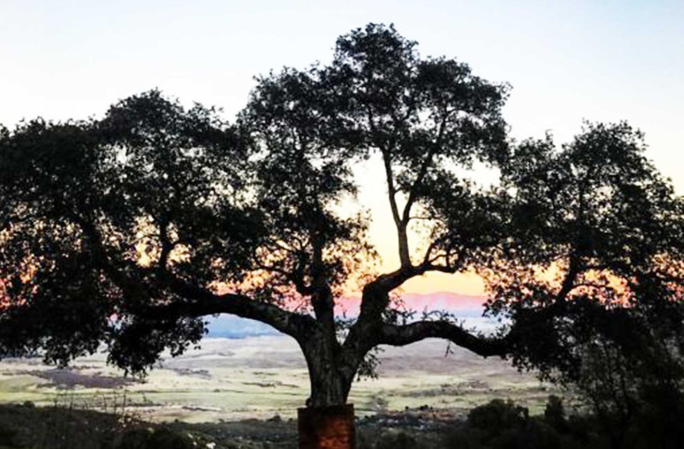 John-Tree.jpg