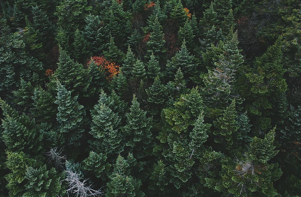 John-Dovonvan-Treetop-Image.png
