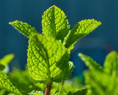 3 Essential Oils to Help Seasonal Allergies