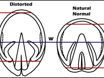 How Hoof Form Relates to Hoof Function