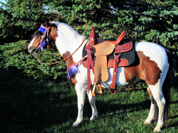 Saddle Fit: A Guide to a Happy Horse and Rider