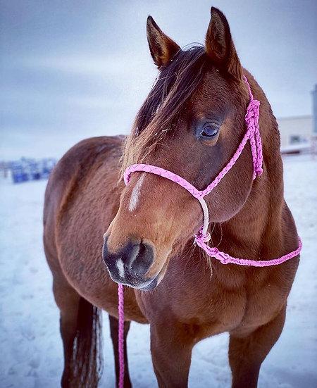 Mule Tape Rope Noseband Pony Halter