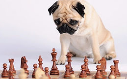 pug-playing-chess.jpg