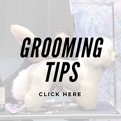 Grooming Tips (1).png