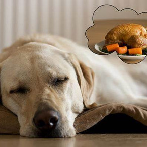 Does Your Dog Dream?