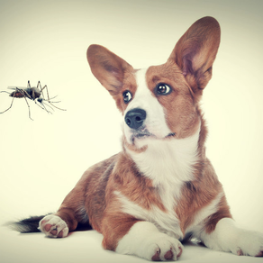 How to Keep Your Dog Safe from Mosquitoes