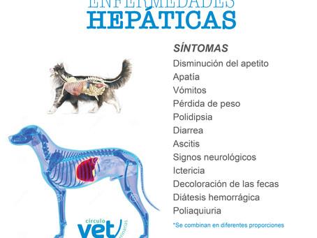 HEPAVET - HEPATOPROTECTOR NATURAL