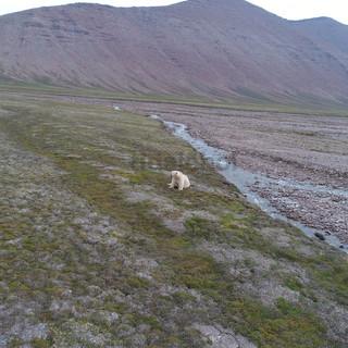 Dicksonfjorden 2019
