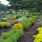 Perennial field - 2.jpg