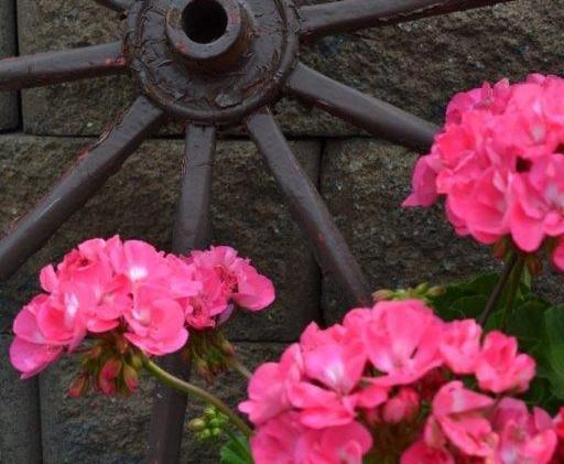 Geraniums and wagon wheel.jpg