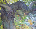 14.   Plane Tree - The Big Branch                 122 x 152.5 cms.jpg