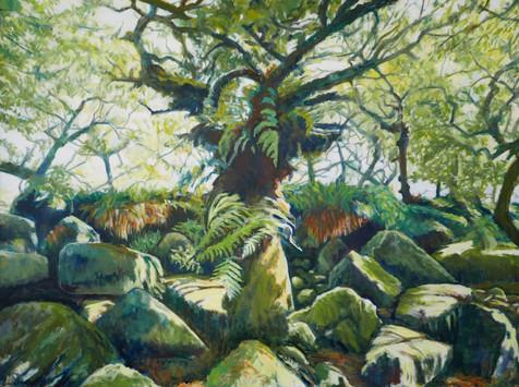 David Shutt (b.1945) 'Oaks, Ferns and Feldspar' oil on canvas, 122 x 164cm