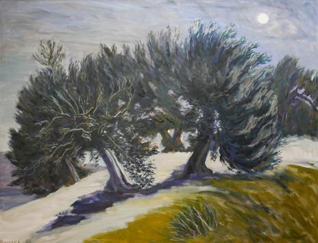 David Shutt (b.1945) 'Rising Moon over Olive Trees' oil on canvas, 71 x 91cm