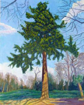 David Shutt (b.1945) 'Great Pine at Cliveden' oil on canvas, 101 x 80cm