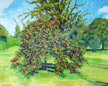 David Shutt (b.1945) 'Apples and Pears' oil on canvas, 80 x 100cm