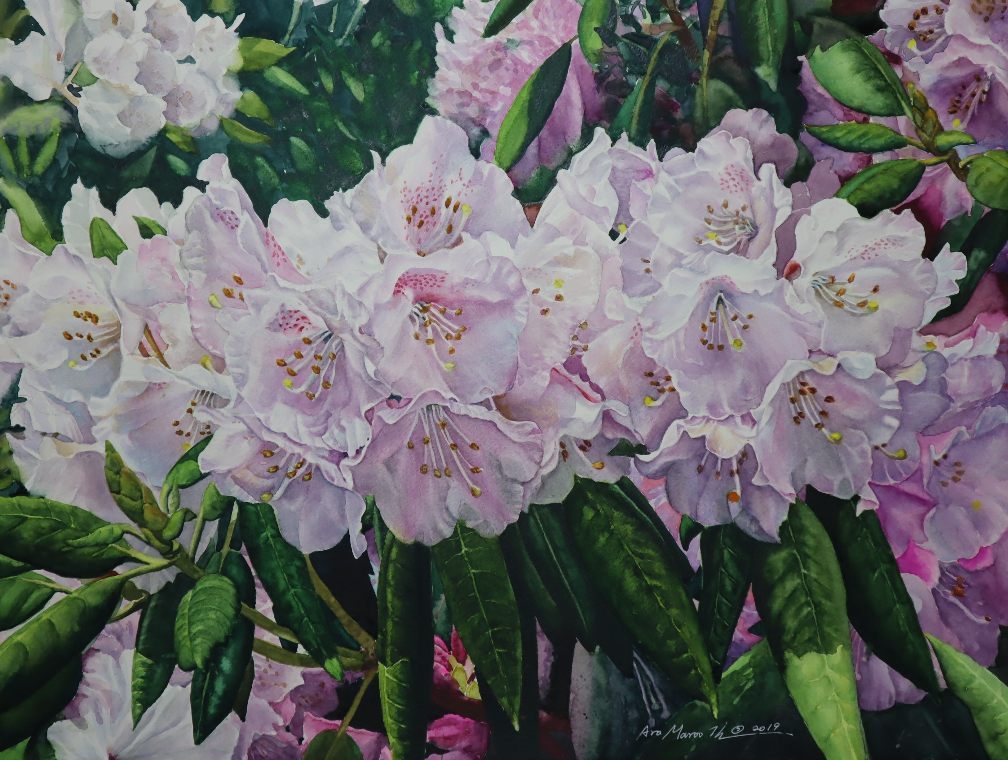 The Midsummer Blossoms