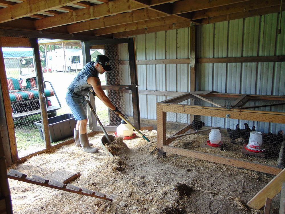 Keeping The Chicken Coop Clean