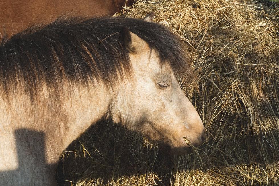 Little Forest Ponies-31.jpg