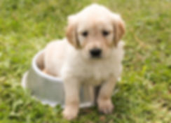 puppy sitting in dog water bowl