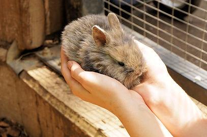 Holding pet rabbit in hands