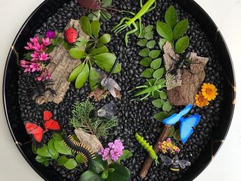 עולם קטן במגש- פעילות סנסורית בנושא חרקים