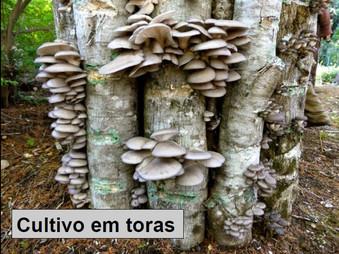 2° Curso de Cultivo de Cogumelos