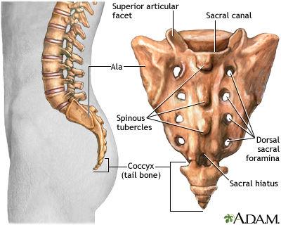 骨折 治療 仙骨
