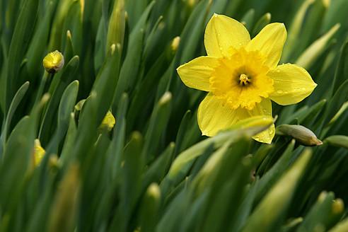 Wielkanoc czyli wielka niewiadoma