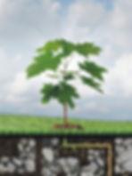 Soul Tree Akashic Healing